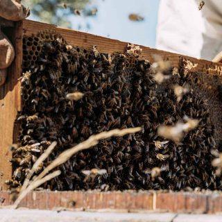 foto-apicultor-dia
